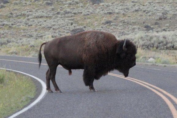 #1 Visit a National Park