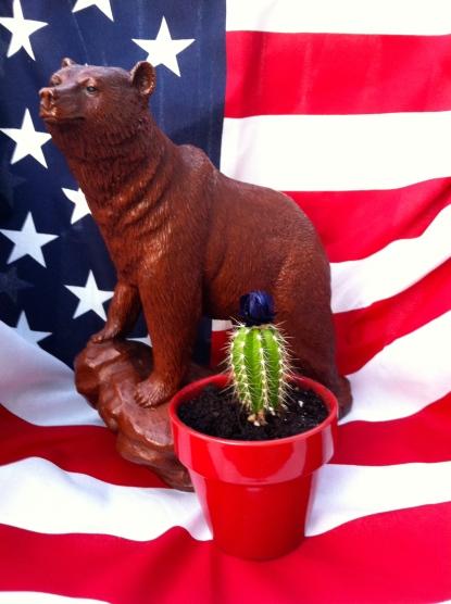 #3 Grow a Cactus