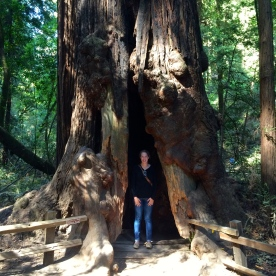 #1 See a redwood